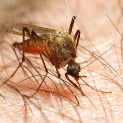 How to Help Mosquito Bites Heal Faster